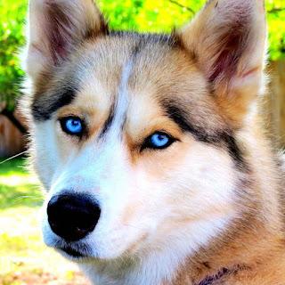 اشكال كلاب وخلفيات متنوعة كلب رائع