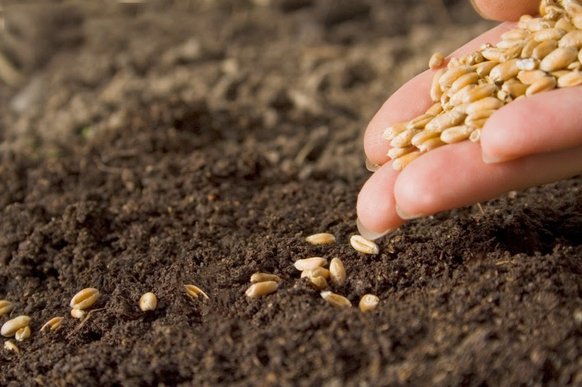 Imagem mostrando bem de perto com close em uma mão a semeadura de um terreno.