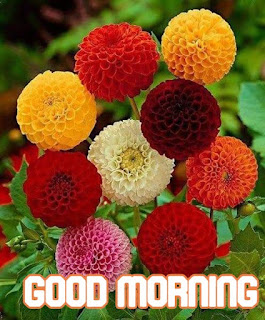 good morning wishes quotes,