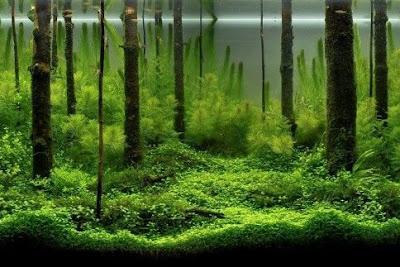 Desain Gambar Aquascape Forest
