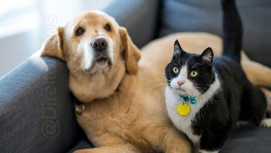 acao custodia animal estimacao vara familia