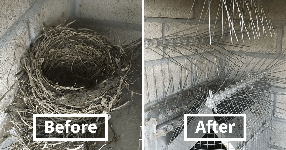Guy Has Been Trying To Get Rid Of Pigeons For Four Years, And It Gets Funnier With Every Picture