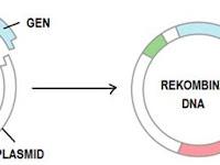 Teknik –Teknik Yang Digunakan Dalam Bioteknologi Modern-Biologi SMA-MA Kelas 12 IPA