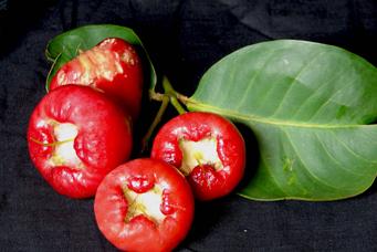 8 Manfaat buah jambu air bagi kesehatan
