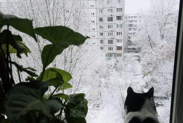 смотрит в окошко кошка...