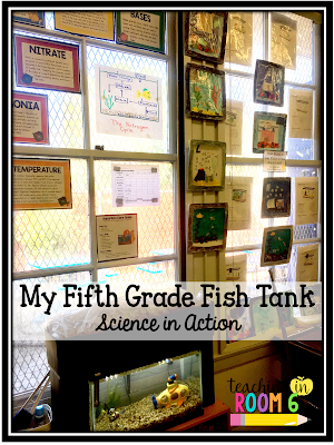 using a fish tank to teach science in an upper elementary classroom