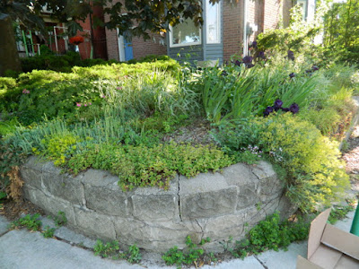 Riverdale Front Garden Summer Cleanup Before by Paul Jung Gardening Services--a Toronto Organic Gardener