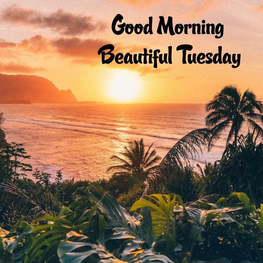 happy tuesday good morning