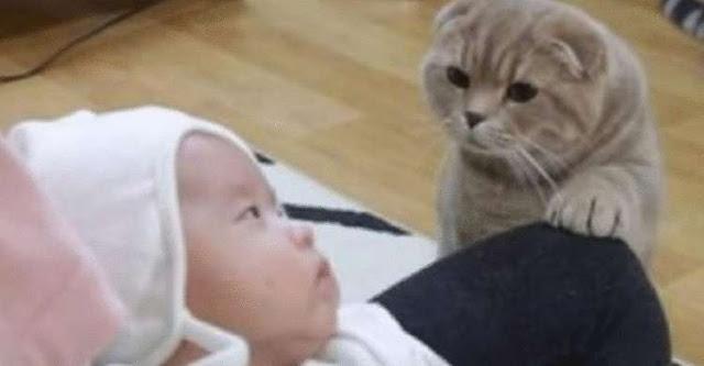 Котам показали новорожденного малыша!!!