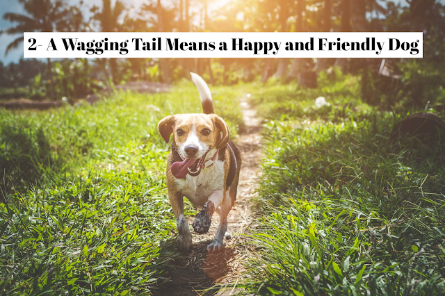 """Actually, the wag of a dog's tail can signal many things, depending upon its speed and the way the tail is carried. A happy tail wag is actually a submissive gesture and one that is often paired with a lower rump, which seems to drag the hips with each swing. Translated, it says, """"You have my respect, and I know you will not hurt me. """"A dog gives this signal completely approachable."""