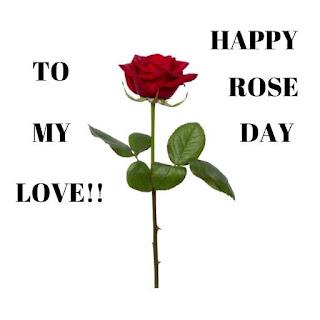 Red Rose Hd Flower