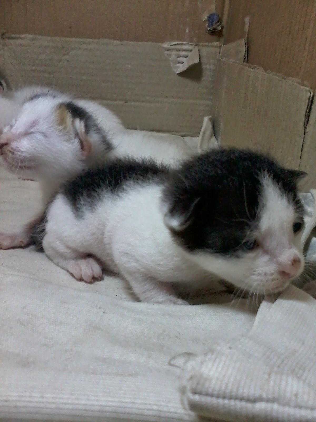 Anak Kucing Kampung Yang Lucu Bikin Gemes