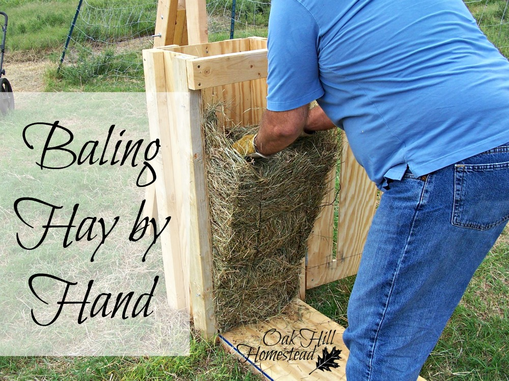 How We Bale Hay By Hand Oak Hill Homestead