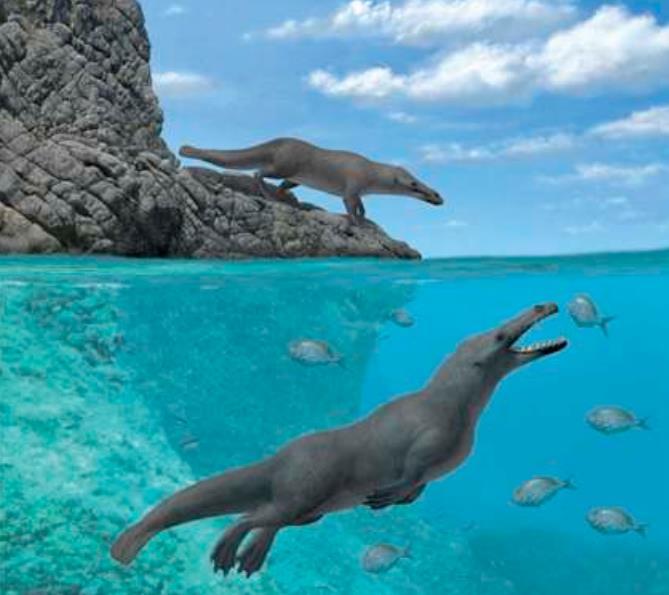 Dört bacaklı balina fosili
