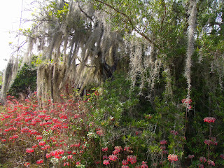 Flores silvestres y musgo