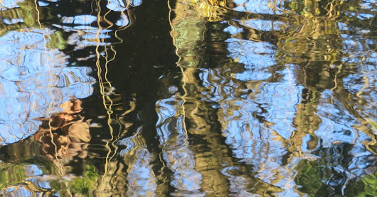Liquid Amber (Thursday morning at Coombe Wood)