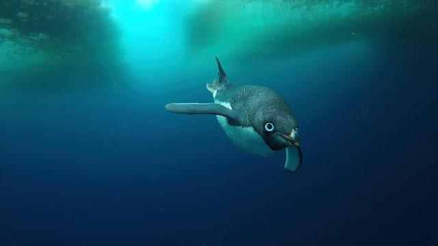 exposición-anual-fotografía-antártica-fotos-ganadoras-2018
