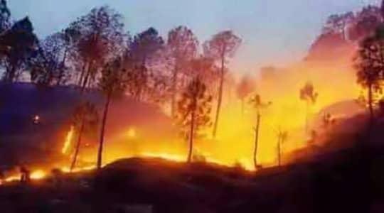 पतरौल ज्यू - कुमाऊँनी कविता, poem in kumaoni language about saving forests,kumaoni bhashamein kavita, kumaoni kavita