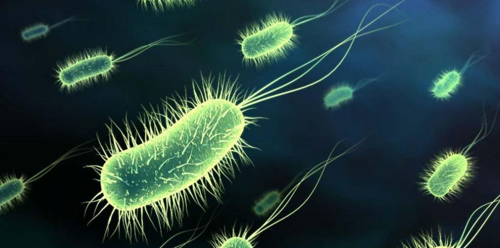 Estructura Del Flagelo Bacteriano Biología