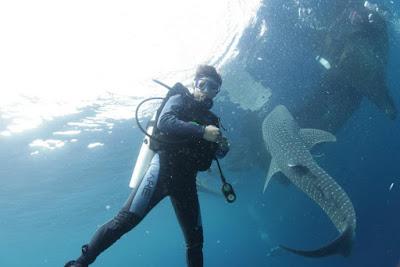Penyelam dan Whaleshark