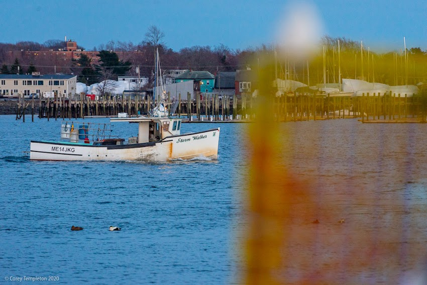Portland, Maine US April 2020 photo by Corey Templeton of the lobster boat Storm Walker returning to Port.