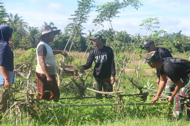 Yonif Raider 300 Membantu Masyarakat Dalam Pembibitan Tanaman Cabei