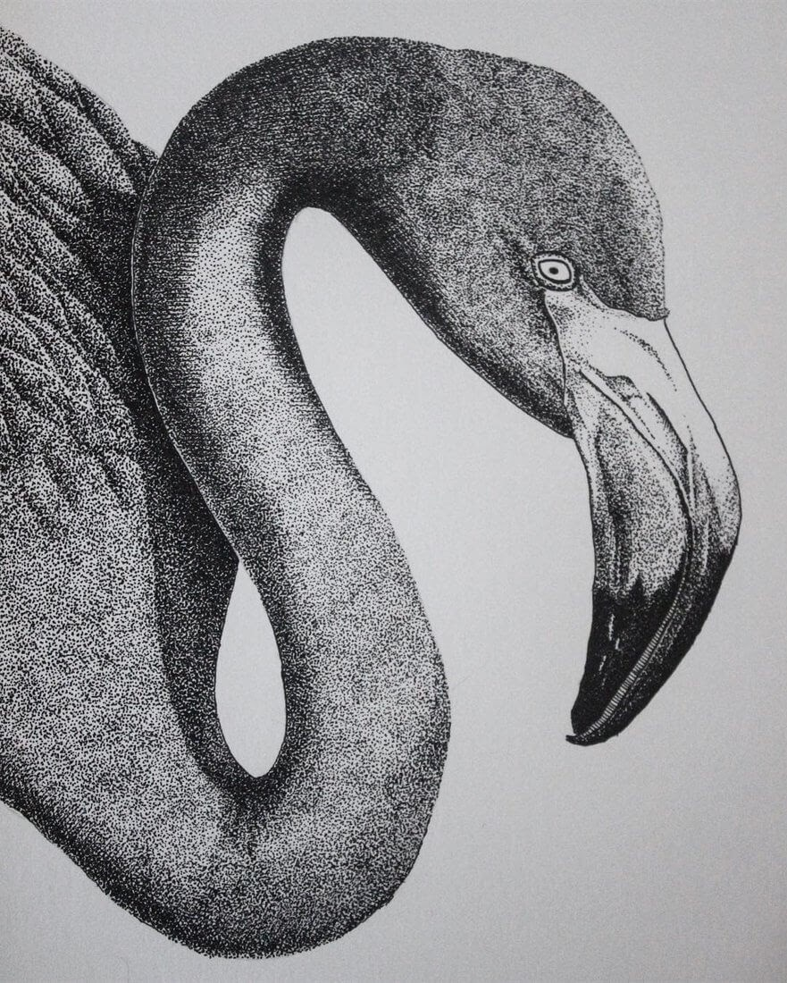 11-Flamingo-Gaspar-Animal-Stippling-and-Cross-Hatching-B&W-Drawings-www-designstack-co