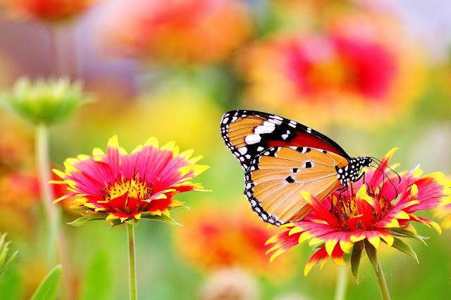 Poem On Nature प्रकृति पर कविता