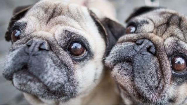 Γερμανία: Η εφορία κατάσχεσε...σκυλάκι από οικογένεια με χρέη και το πούλησε στο E Bay