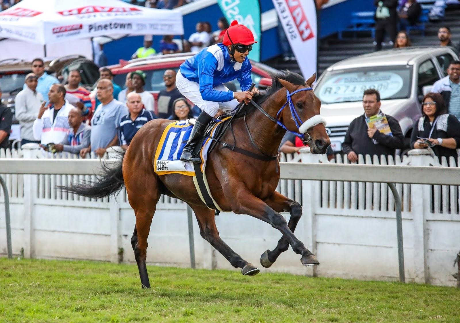 Vodacom Durban July 2020 Horse Profile - Soqrat