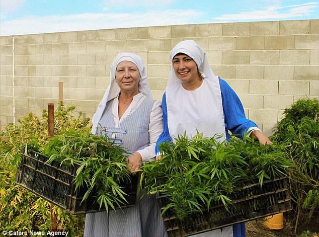 Είναι μοναχές αλλά βγάζουν πολλά λεφτά πουλώντας μαριχουάνα! (video)
