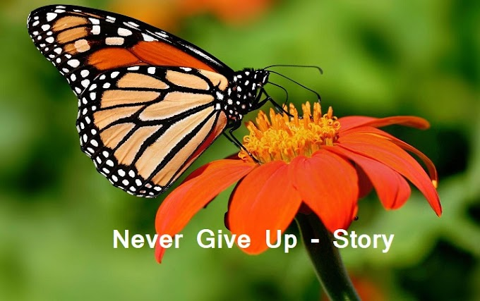 Never Give Up - Stories & Quotes