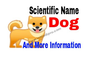 Scientific Name Of Dog
