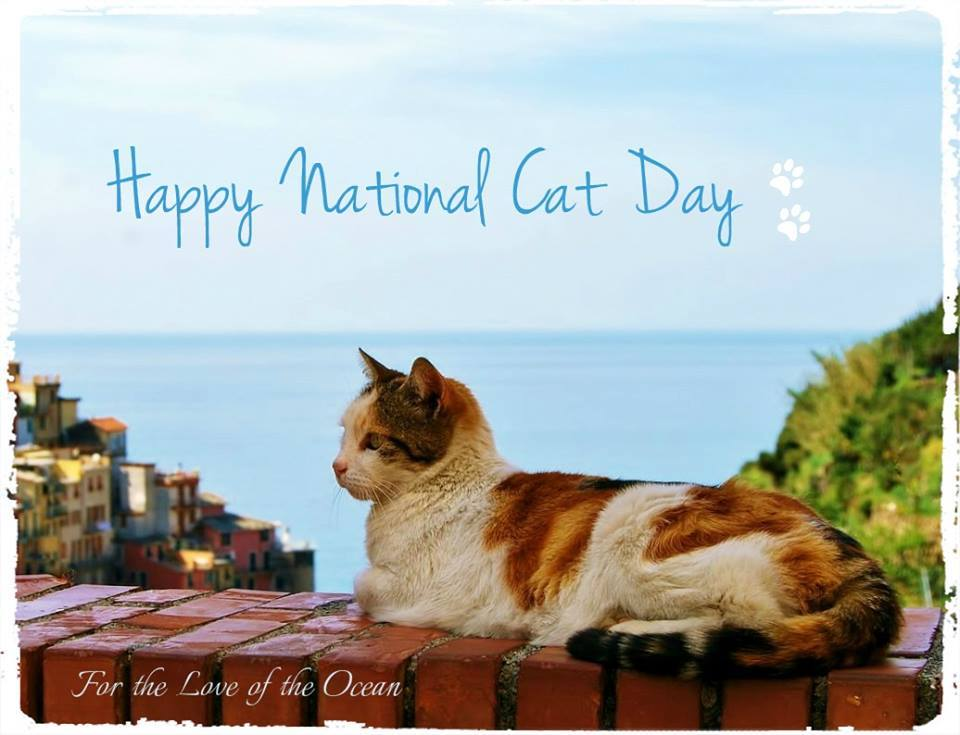 National Cat Day Wishes for Whatsapp