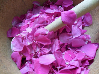 dzika róża witamina c