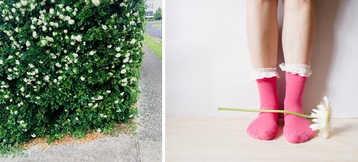 pink socks and white gerbera
