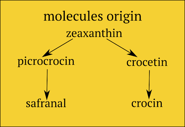 saffron's molecules origin
