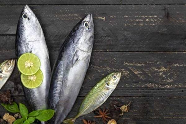 Berikut Harga Jual Ikan Cakalang di Jogja Per Kilo
