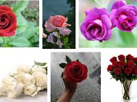 Tips Menanam Bunga Mawar Dari Biji