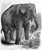 Bolivar the Elephant - from Philly