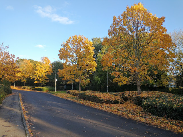 The avenue of trees leading through the main road on our estate