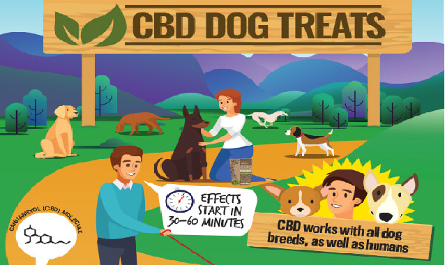 CBD Dog Treats #infographic