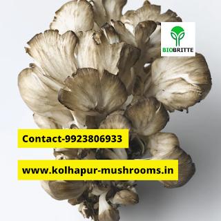 Mushroom powder for weight gain