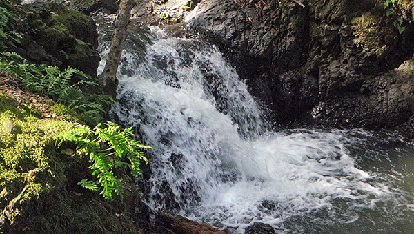 Large waterfall with fern in foreground