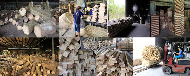 gỗ cao su xẻ sấy