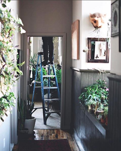 la maison pleine de plantes de Hilton Carter