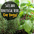 8 Best Herbs for Your Dog
