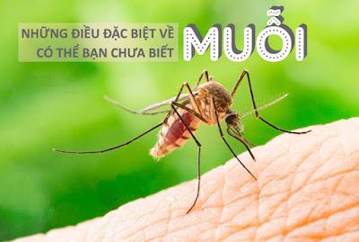 Muỗi sống được bao lâu