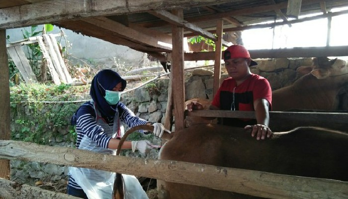 Pemkab Sinjai Awasi Perdagangan dan Distribusi Hewan Kurban