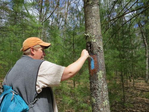 painting a blue trail blaze on a tree